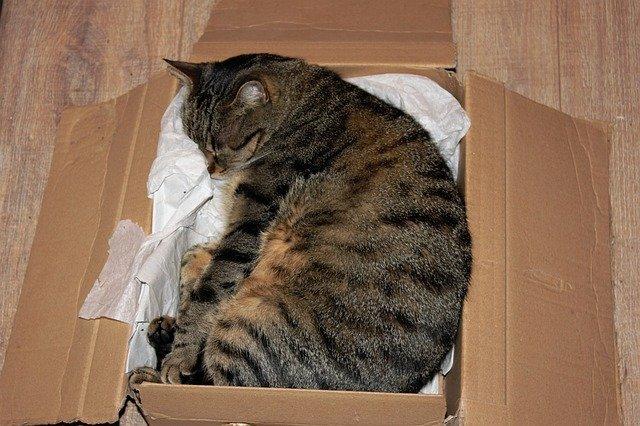 Perché i gatti amano le scatole? Dove nasce questa passione?