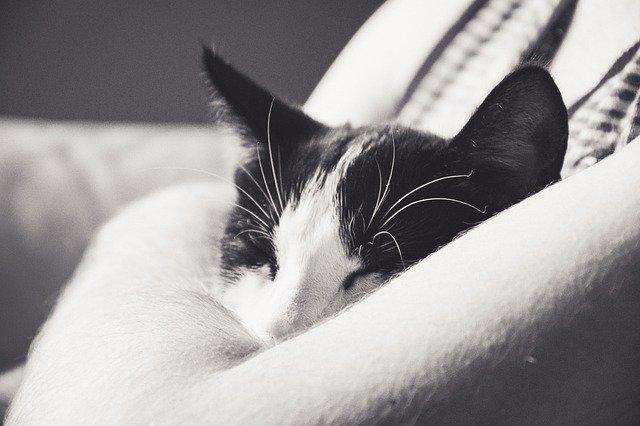 Perché il gatto dorme addosso al suo padrone?