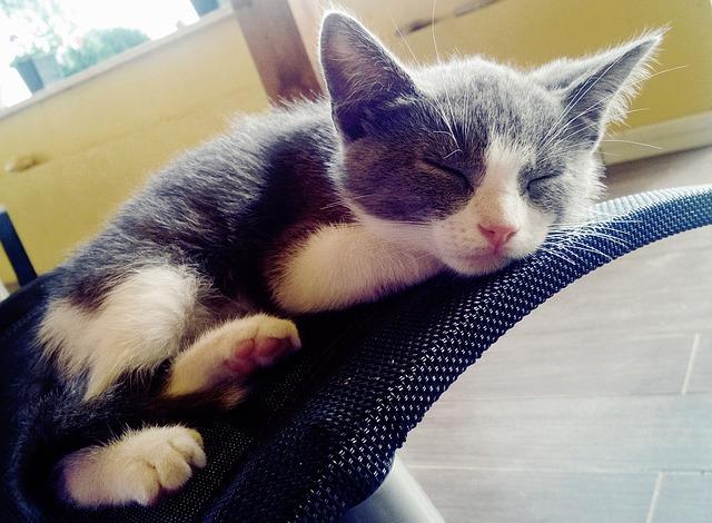 """Casas para gatos: consejos para una casa """"hecha en casa"""""""
