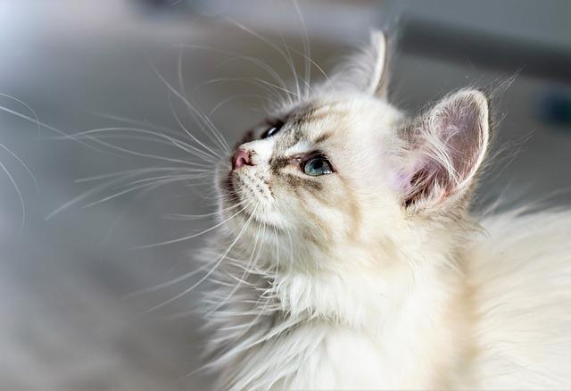 10 bugie sui gatti che la gente dice: quali sono?