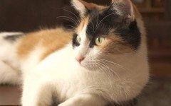 I 4 modi in cui il gatto dice ti voglio bene