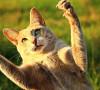 Gatto con unghia rotta: cause e cosa fare