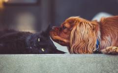 Piante tossiche per cani e gatti: quali sono?