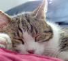 Influenza nel gatto: cause, sintomi e terapia