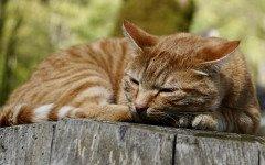 danni da esposizioni al benzalconio cloruro nel gatto