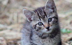 7 Crazy Facts About Cat Anatomy