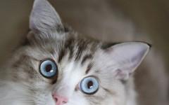 Nombres de gatos machos: una importante decisión