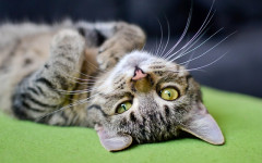 Got a New Kittie? Check out These Male Cat Names