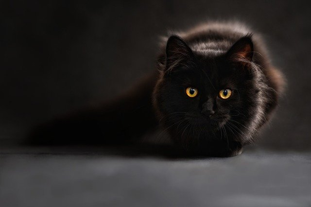El gato Negro de Edgar Allan Poe y el maltrato animal