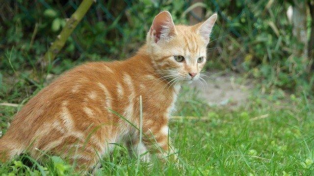 Le 10 cose sui gatti che non sai e che non sospetti