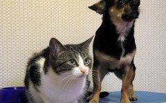Avvelenamento da marijuana nel cane e nel gatto