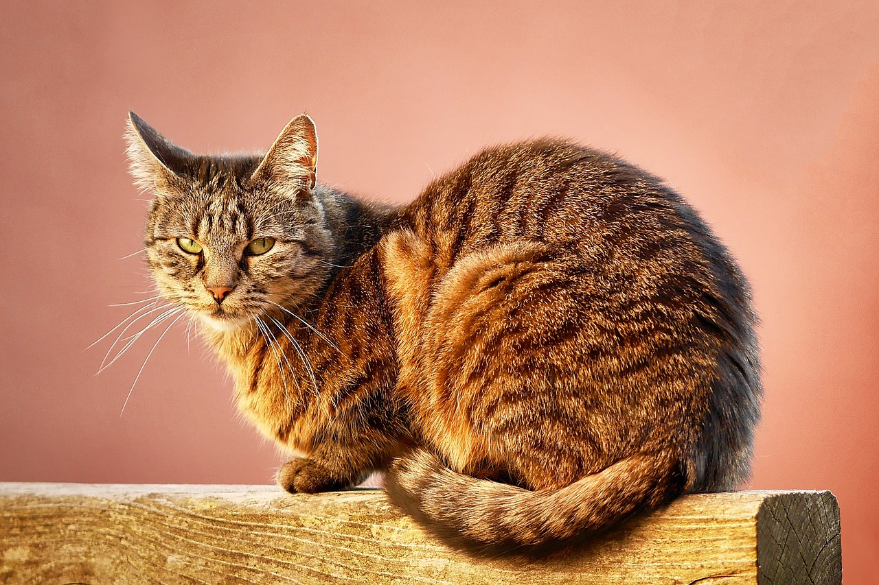 Cat Behavior: Pretty Interesting Facts About it