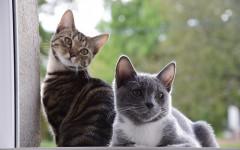 Personalità dei gatti