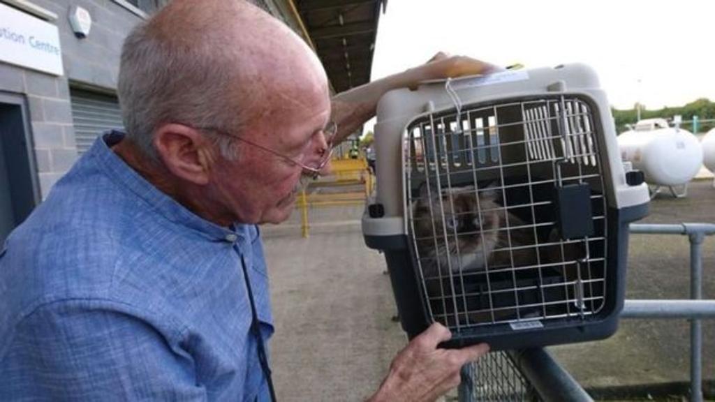 Gatto perso in aeroporto ritrovato dopo due mesi