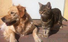 patologie corneali in cani e gatti