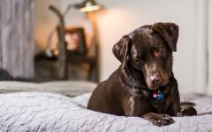 Dog-Friendly Hotels: our pets deserve premium service too