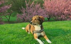Divieto cani nel parco: sì, ma solo per emergenza sanitaria