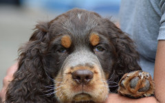 Zoppia del cane: perché il mio cane non si regge sulle zampe?