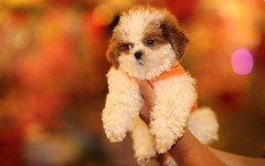 Che cosa odiano i cani? I 10 errori dei proprietari