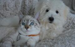Cane e gatto fanno bene anche alle persone anziane