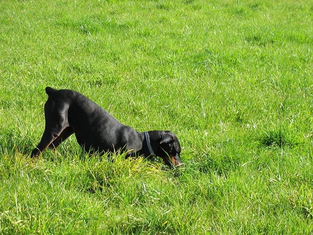 Cani scavano buche: per quali motivi i cani lo fanno?