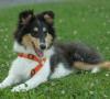Come insegnare al cane a smettere di abbaiare? Scopriamolo!