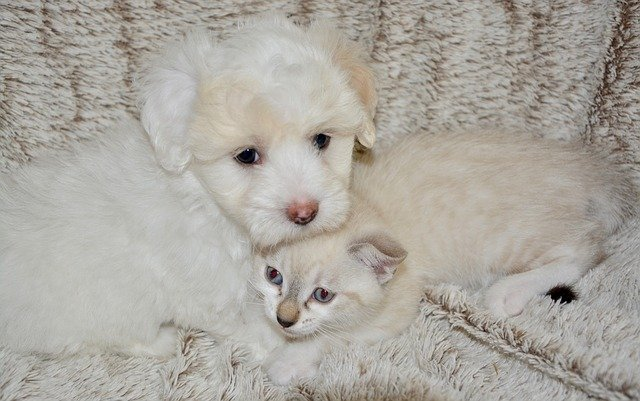 Proteggere gatti e cani dal freddo: i consigli da seguire