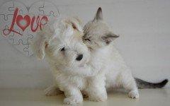 Foto di cuccioli di animali: le 10 immagini più belle