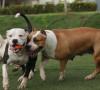 cane che scappa