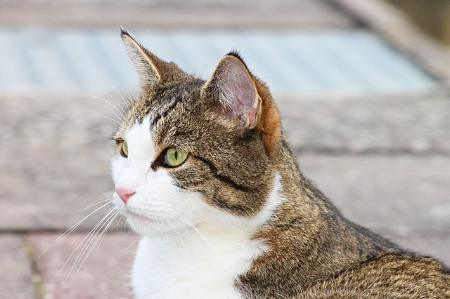 Ear Mites in Cats: How to Control Them