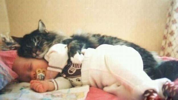 gatto-abbraccia-bimbo-1