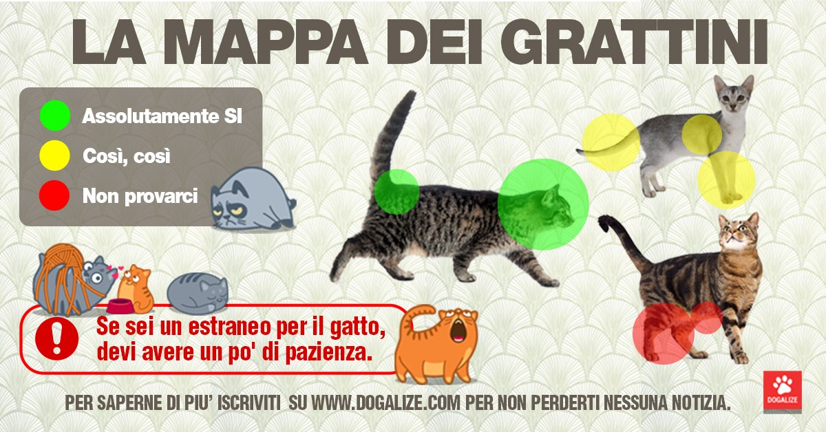 grattini gatto