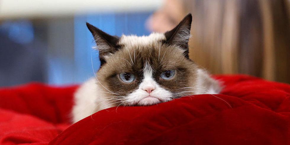 Gatti più famosi del web: gli 8 felini più conosciuti
