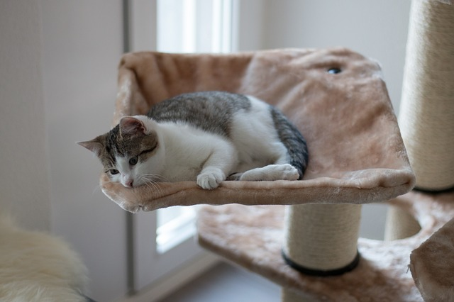 Get Your Friend a Nice Cat Condo