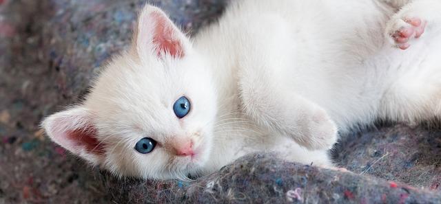 Sei pronto ad adottare un gatto? Cosa c'è da sapere