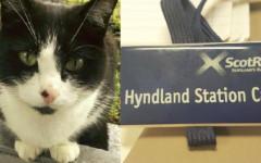Kyle, il gatto ambasciatore della stazione dei treni di Glasgow