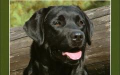 Labrador: la recensione del libro di Ginoulhiac Luisa