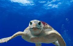 Tartaruga d'acqua: informazioni utili e curiosità