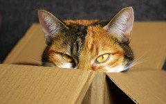 comportamenti strani dei gatti
