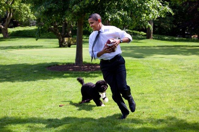 Raza del perro de Obama: conoce al divertido Bo