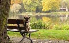 Cane smarrito? Come creare un volantino ricerca del cane