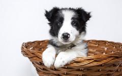 Quali sono i cani più dolci? Ecco i 10 cani più dolci!