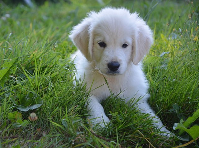 Cutest Dog In The World Let S See Who They Are Dogalize