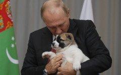 Cane in dono a Putin: un cucciolo di Alabai