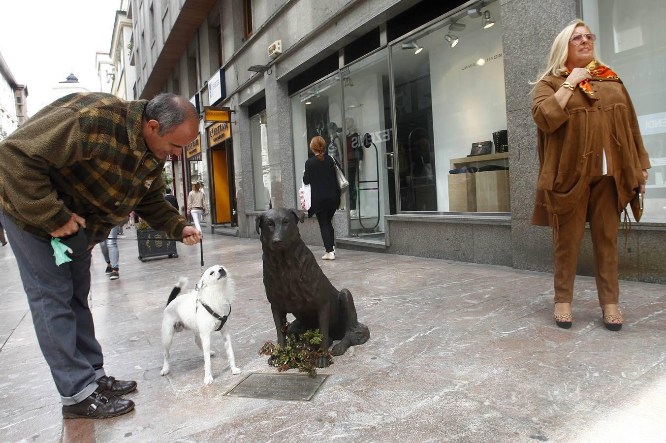 Rufo el perro de Oviedo