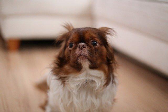 I cani possono vedere fantasmi? E' vero?