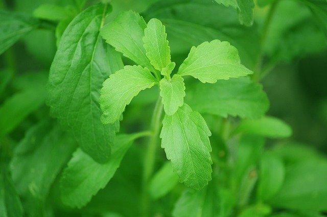 Los beneficios de la stevia para las mascotas