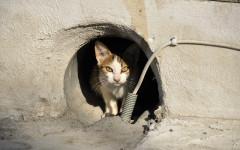 Come aiutare gatti randagi in inverno: riparo e alimentazione
