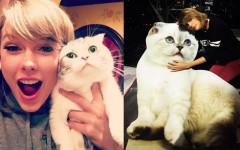 Taylor Swift y sus mascotas, sus gatas viajeras