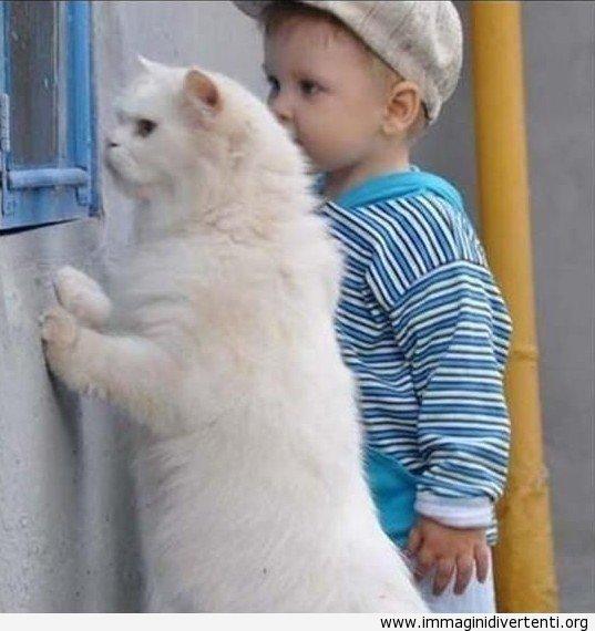 un-simpatico-gatto-e-un-simpatico-bambino-1